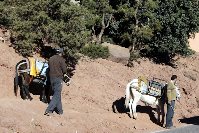 Dos burros por las carreteras de Marruecos