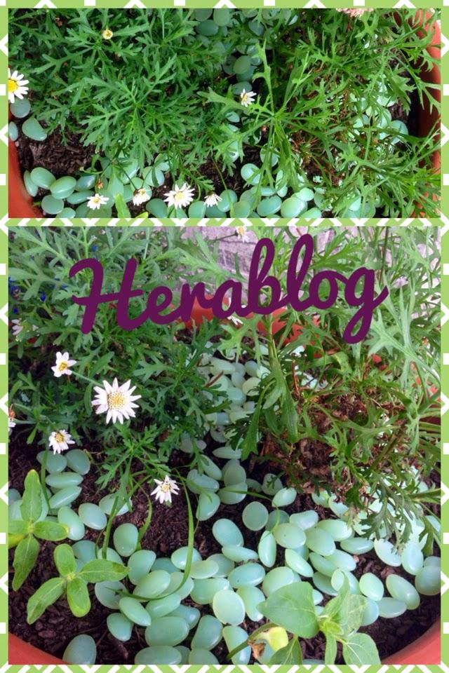 Giardini con sassi colorati for Giardini con sassi colorati