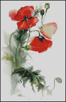 Poppy-water-colour