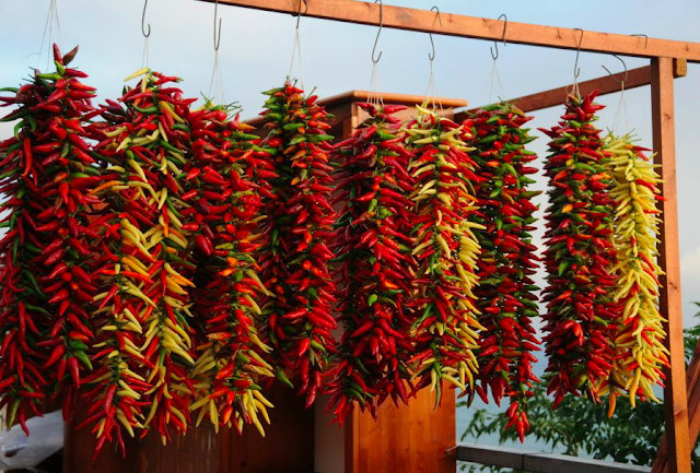 """There will also be chilli-eating contests, like the """"International Championship of chilli pepper eaters"""""""