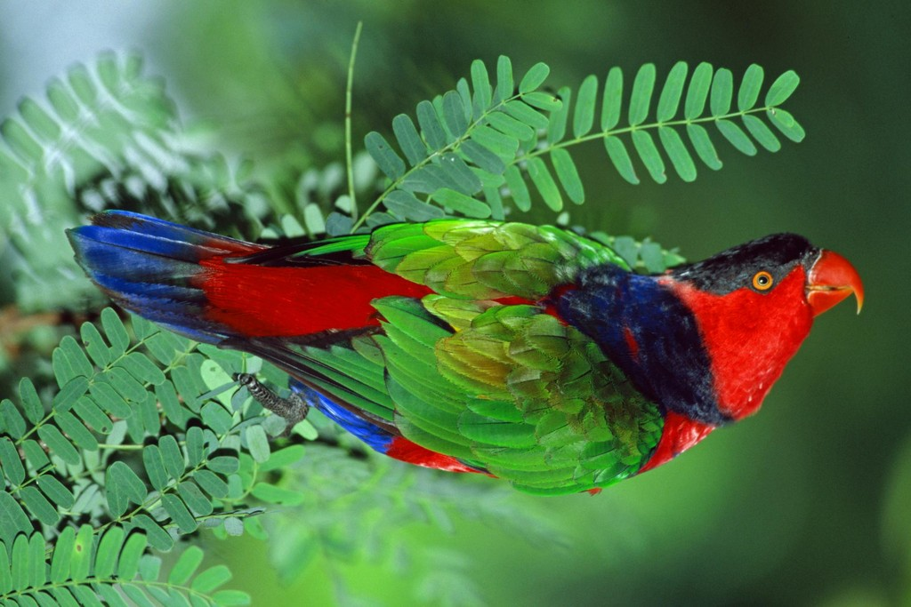 ANIMALS OF PLANET EARTH: EXOTIC BIRDS