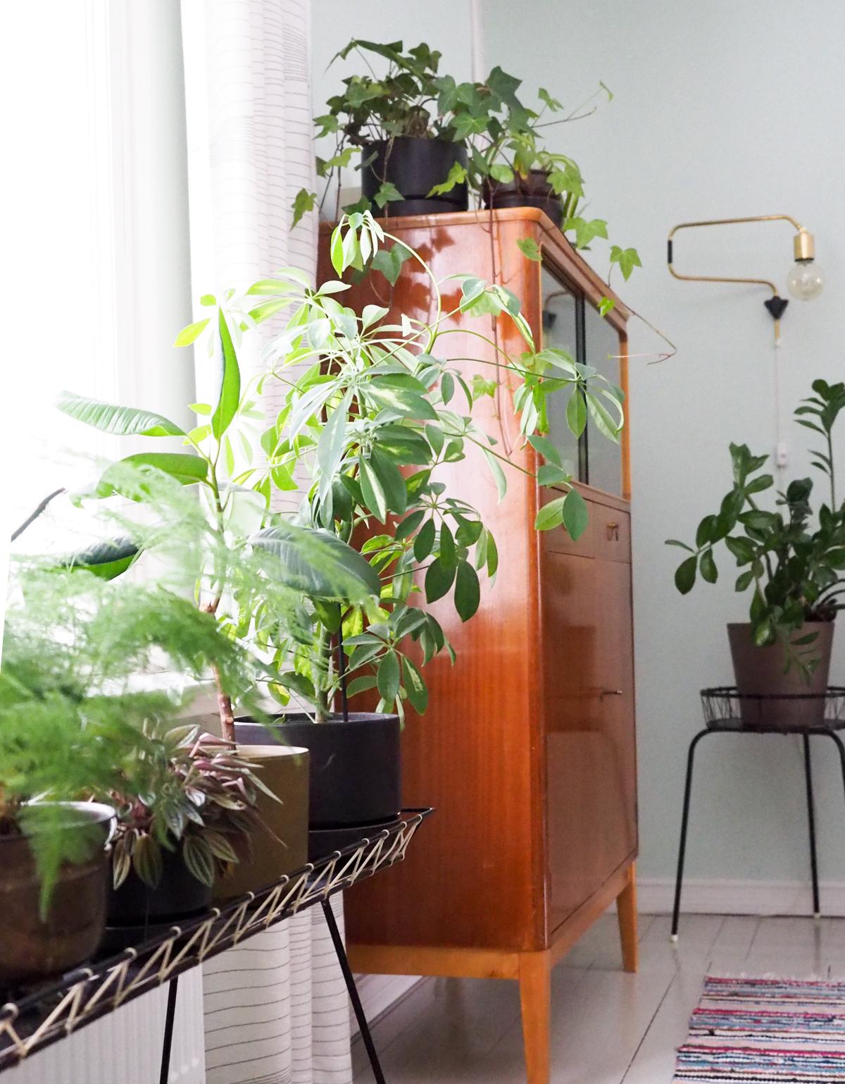 viherkasvien hoito-ohjeet