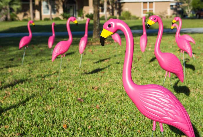 more fake flamingos than real ones