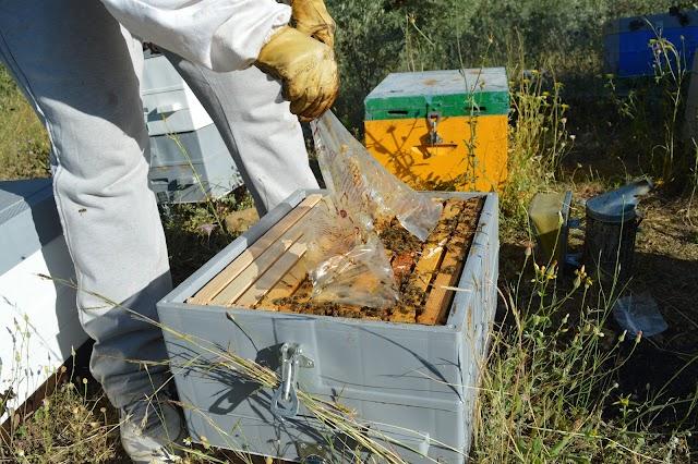 Ποιές μελισσοτροφές να μην αγοράσουμε - Οι σοβαρότεροι κίνδυνοι. 3 μυστικά!