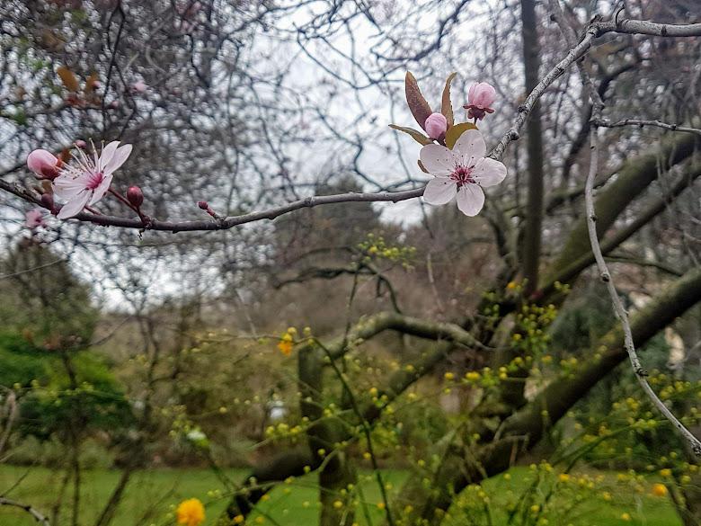 戰神廣場附近的花