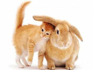 рыжие кот и кролик