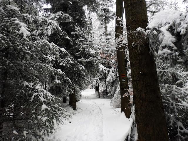 Miejscami ścieżkę przykrywają trochę gałęzie.