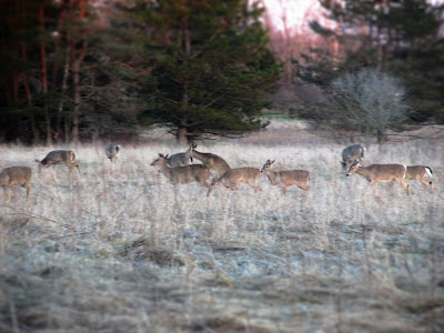 Count My Blessing Wednesday- The Wonder of Nature-herd of deer