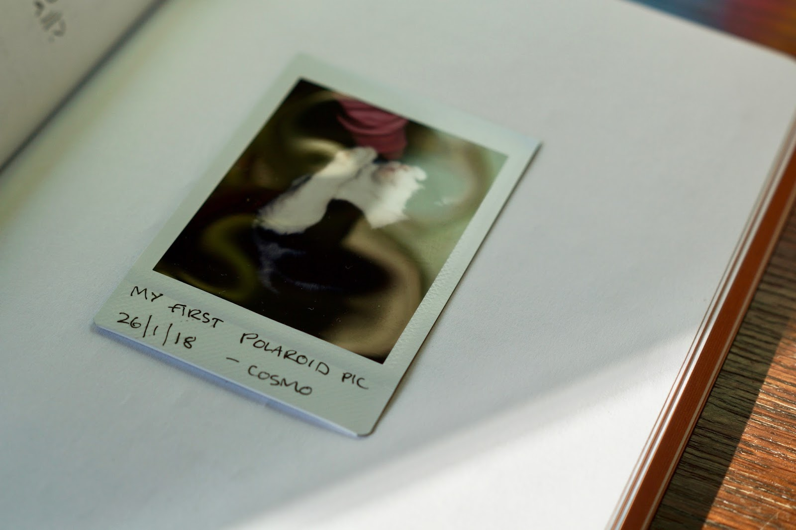 A polaroid image in a journal
