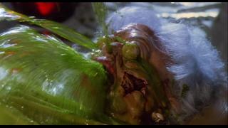 http://4.bp.blogspot.com/-IuxTZVPNpvI/UHNz56GUutI/AAAAAAAAHO8/3E1m7I5L_U0/s1600/Dead-Alive-embalming-fluid.png