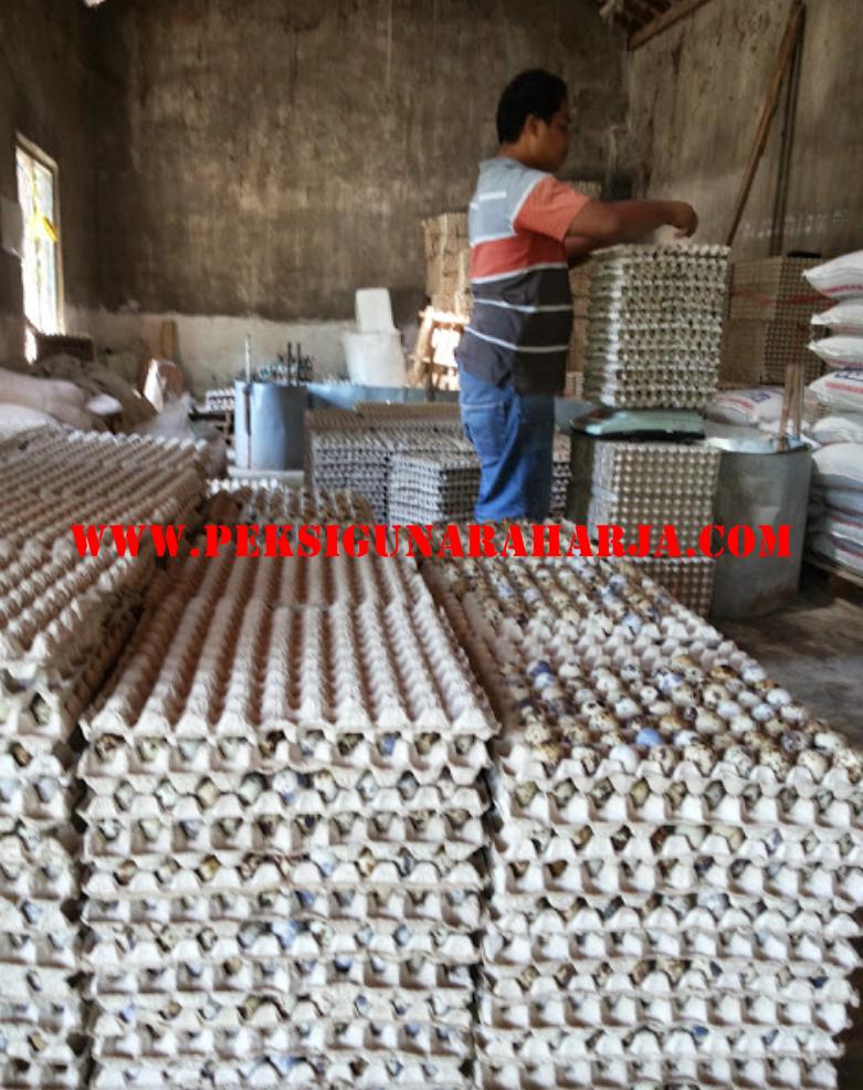 Tips Memaksimalkan Produksi Telur Puyuh
