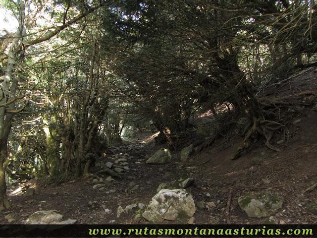 Atravesando arbustos
