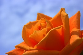 Portakal Aşk doğurdu :)