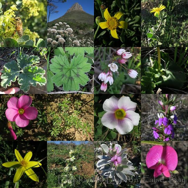 Signal Hill June flowers