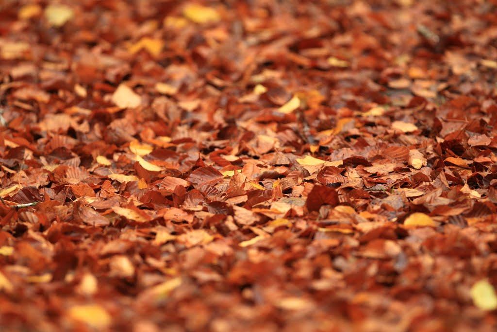 fred maurel feuilles d 39 automne et sous bois. Black Bedroom Furniture Sets. Home Design Ideas