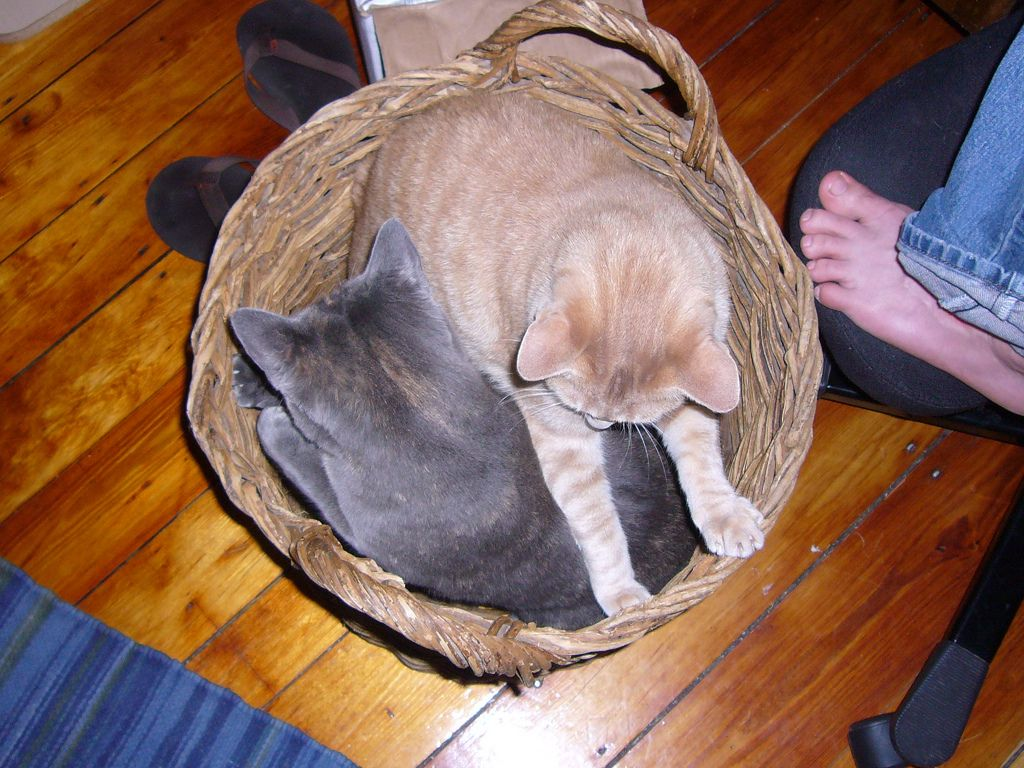 19. Cats in a basket by zannect