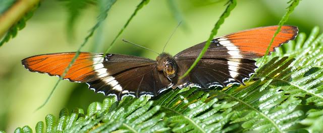 صور اجمل الفراشات