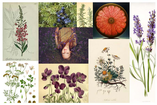 epilobe,gin-aux-fleurs,fleurs-sauvages,violette,gin-violette,gin-quebecois,terroir,louiseville,mauricie,quebec,mariana,distillerie,sprititueux-diberville,madame-gin