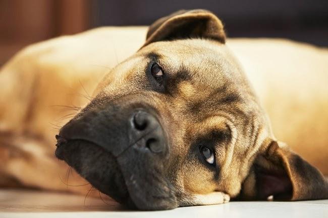 Karmienie psów wybrednych