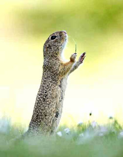Prairie dog conductor