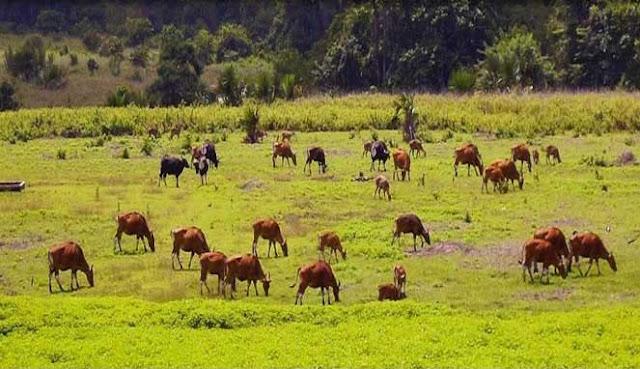 yaitu salah satu kota kabupaten yang terletak di Provinsi Jawa Timur 10 TEMPAT WISATA MENARIK DI KABUPATEN BANYUWANGI