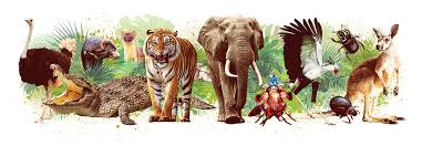 Animals Name In Hindi and english