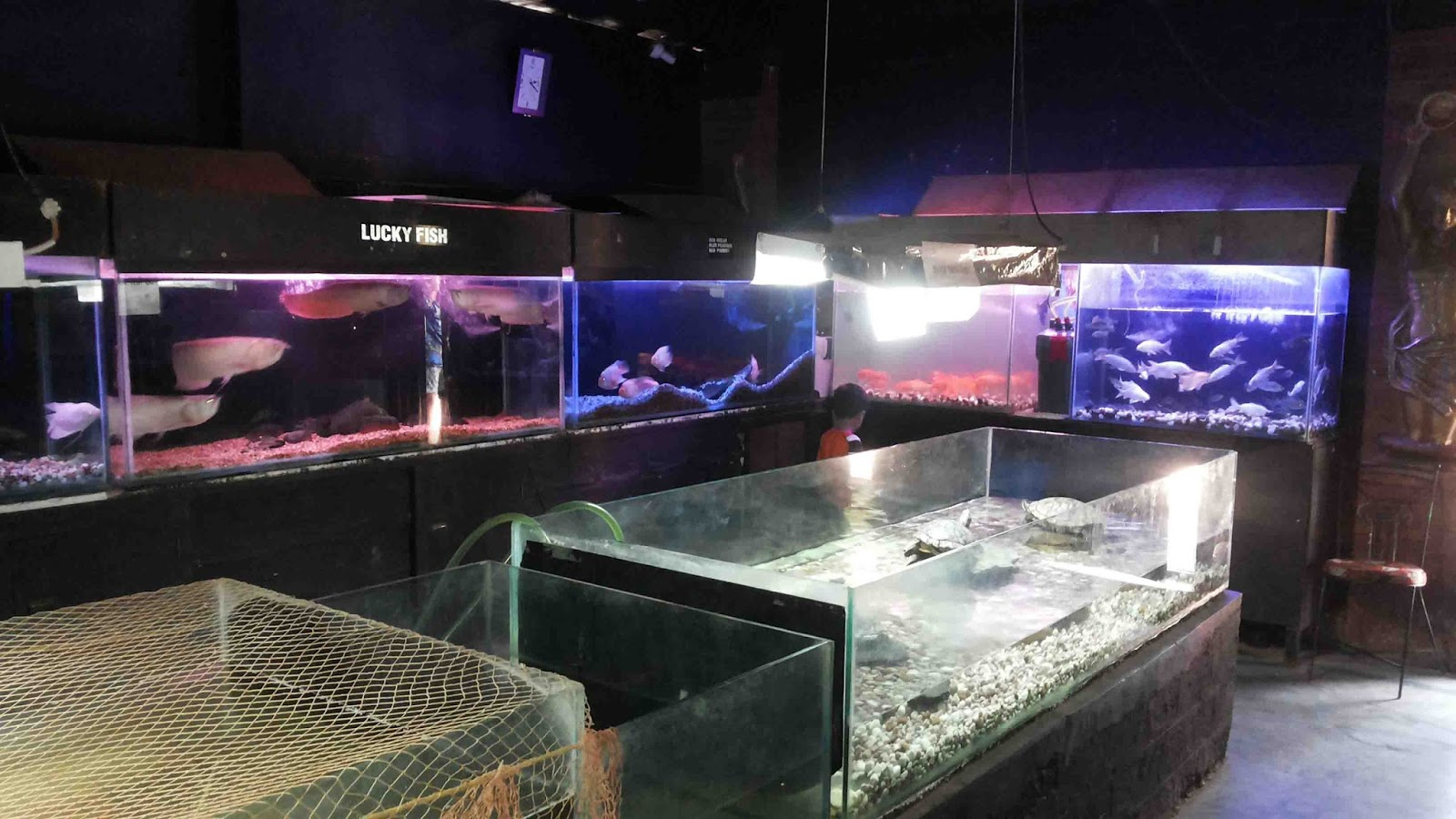 Fish aquarium verna goa - Inside Arrangement Of Aquarium