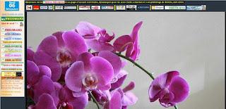 http://cei017.oxatis.com/PBCPPlayer.asp?ID=1866944&ADContext=1