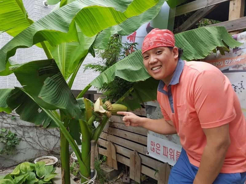 Bananas en Daegu en Corea del Sur