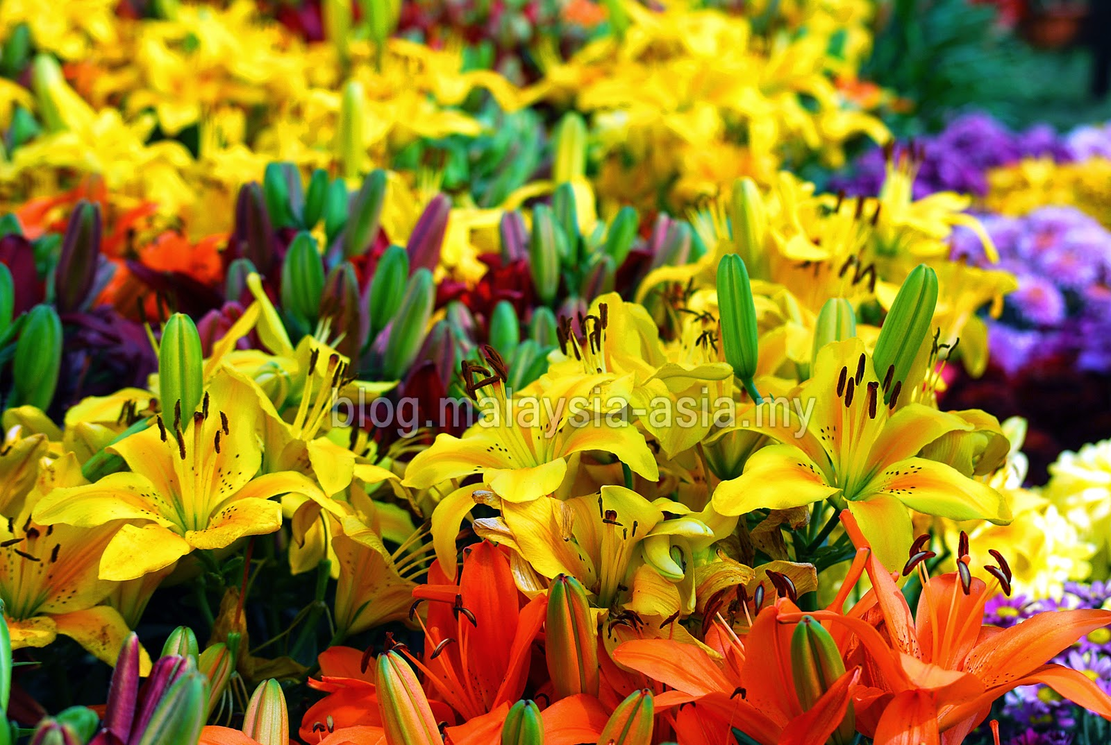 Floral Flower Festival in Penang