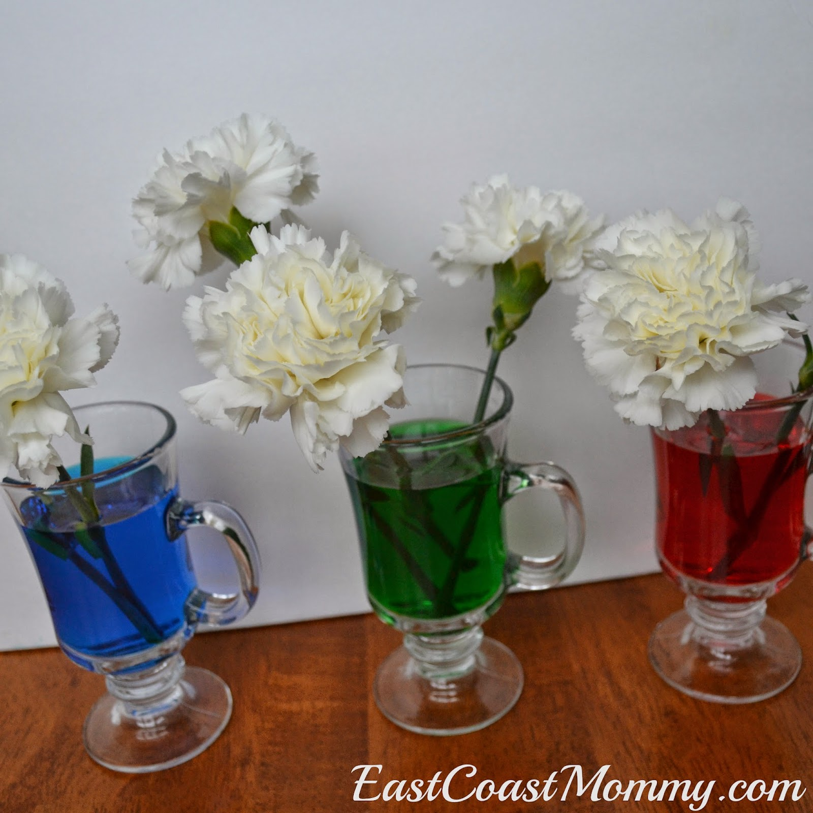 East Coast Mommy: March Break Science Fun {Color Changing Carnations}