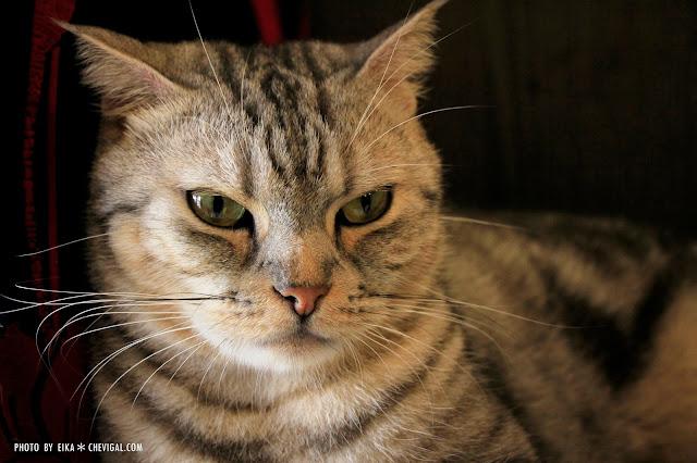 MG 0078 - 台中南區│山本屋日式拉麵。有貓掌蛋的拉麵也太療癒!還有萌萌店貓陪你一起玩喔!