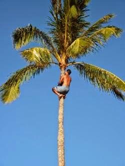 Taad,s Tree