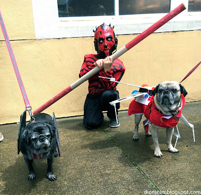 Two pugs dressed like ships and their person