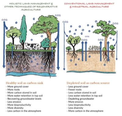 regeneratieve versus industriele voedselproductie