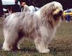 Morsorosso cani da guardia cani da protezione gregge for Cane da pastore della russia meridionale