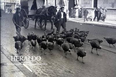 Pavos por el coso de Zaragoza