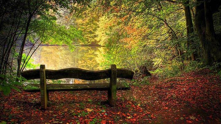 sonbahar manzarası ormanın içinde