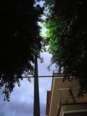 un lampione di via Altofonte oscurato dalla chioma di un albero