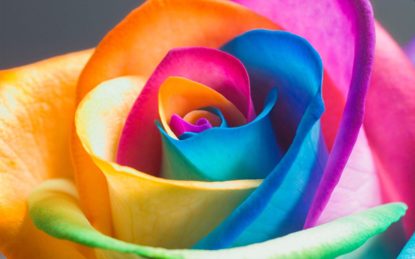 Colorful Flower Wallpaper | Desktop Wallpapers