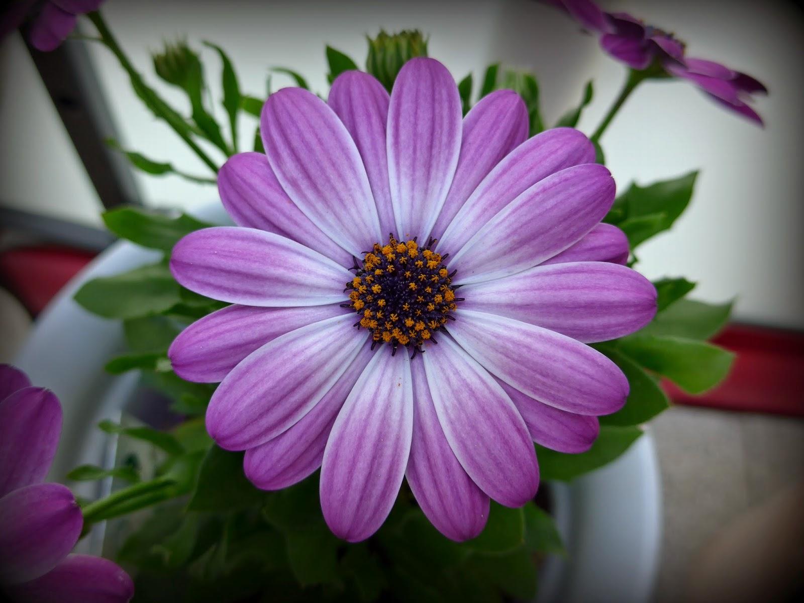 Nadelwahn Blumen Im April Und Neue Wege