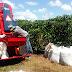 Agricultura familiar em Rondônia terá investimentos de mais de R$ 160 milhões em máquinas e implementos em 2018