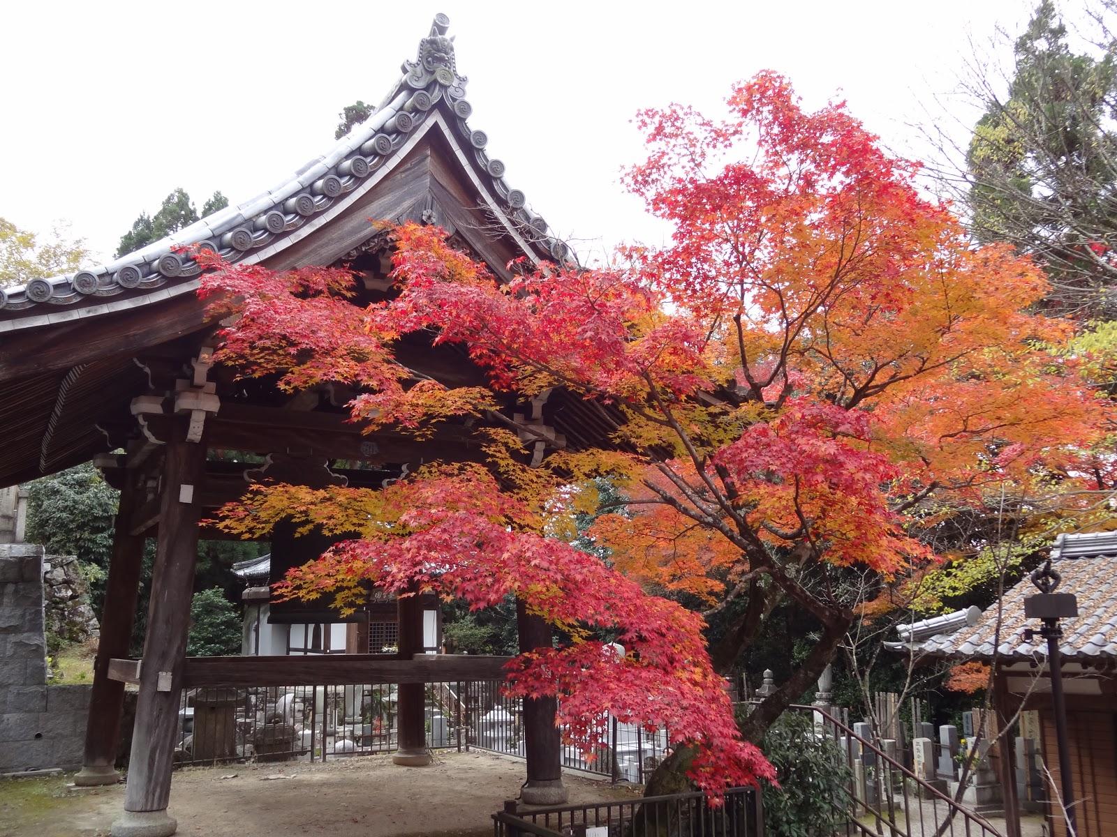 京都永觀堂極品楓 | 真幸福