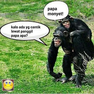 Inilah 21 Meme Monyet Api dan Juga Ramalannya