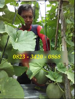 AGEN NASA DI Kolang, Tapanuli Tengah - TELF 082334020868