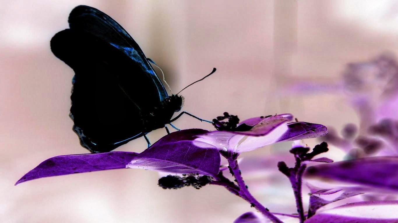 Krajobraz Po Wierszach W Objęciach Motylich Skrzydeł