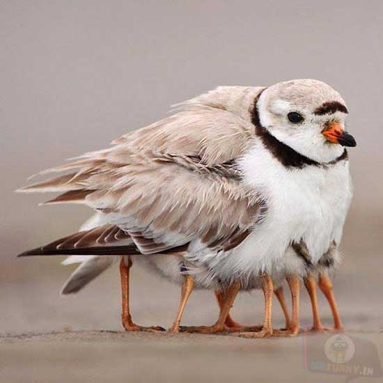 Wait. This bird has too many legs