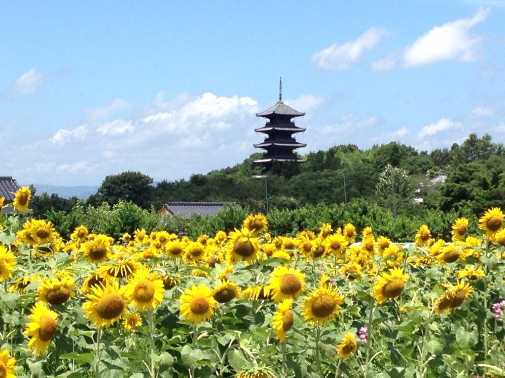 Japan Seasons – Weather and Travel Tips About Each Season ... |Japanese For Summer