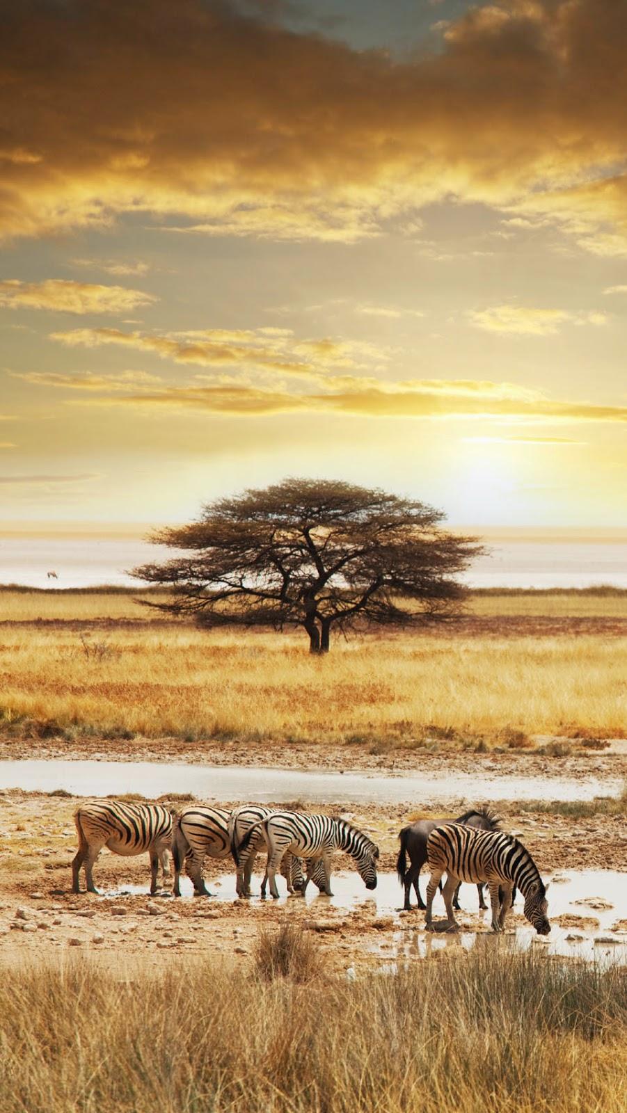 10 Best Adventure Holiday Destinations | Etosha National Park, Namibia