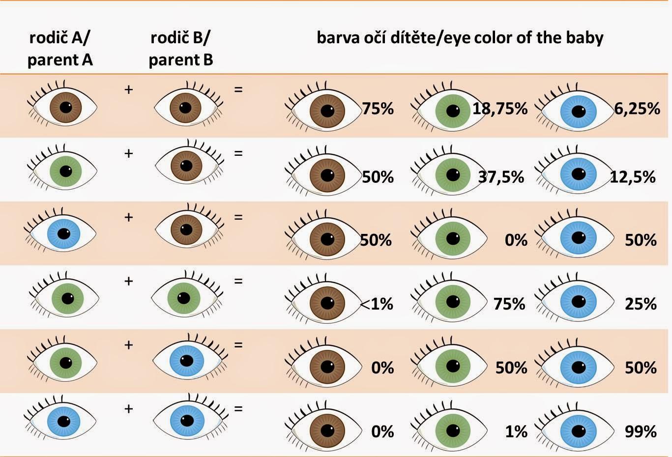 Gambar Baby Eye Color Predictor Chart Template Stock Image And Jpeg